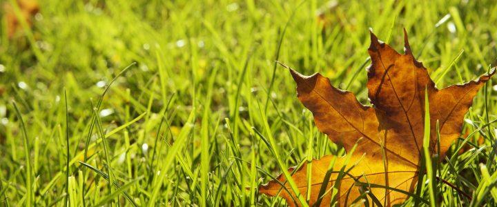 Fingerspiel im Herbst